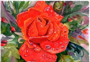 1503 rose challenge