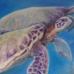 Turtles 16