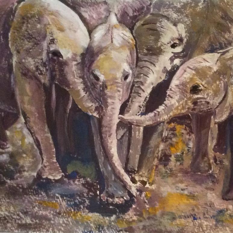 Elephant 16