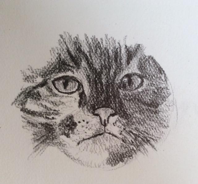 My Cat Study